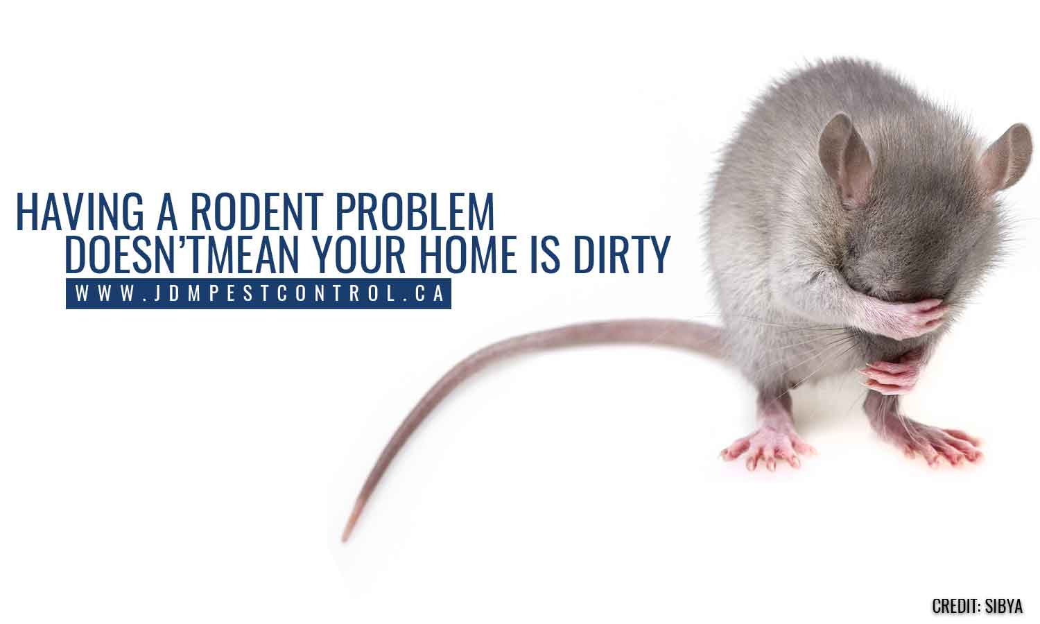 Having a rodent problem doesn't mean your home is dirty