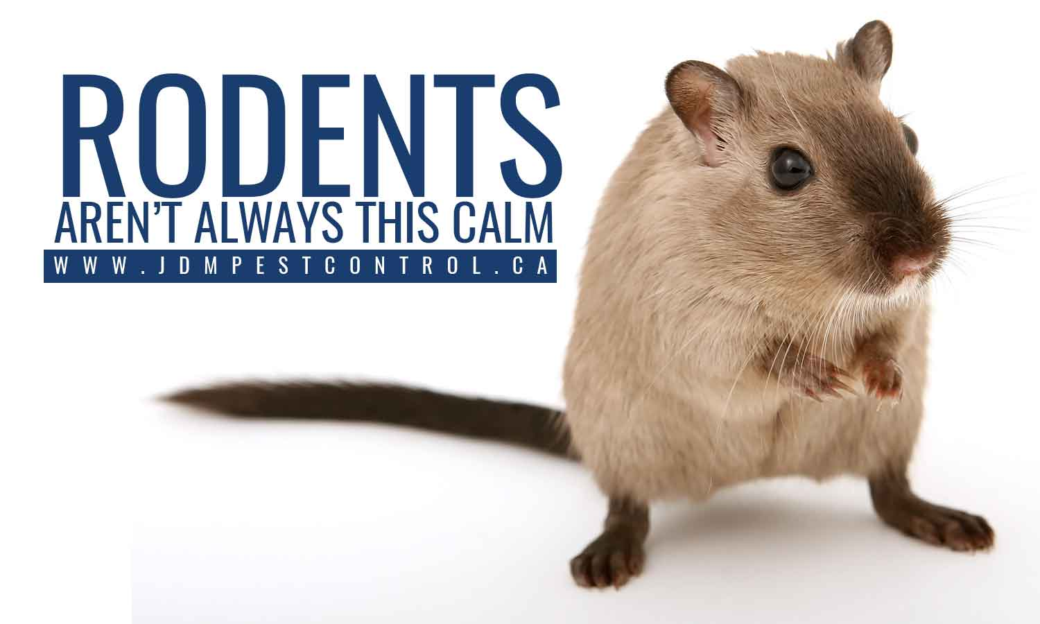 Rodents aren't always this calm