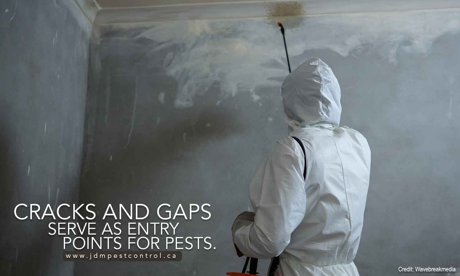 Cracks and gaps serve as entry points for pests.