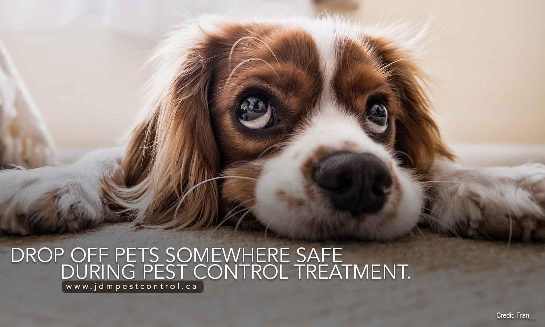 Drop off pets somewhere safe during pest control treatment.