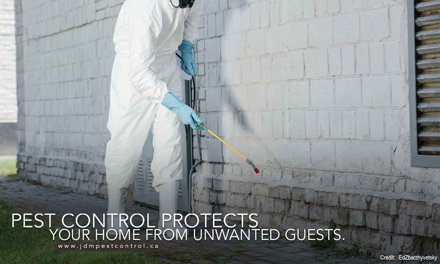 Pest control protects your home from unwanted guests.
