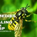 DIY Remedies for Dealing With Wasps