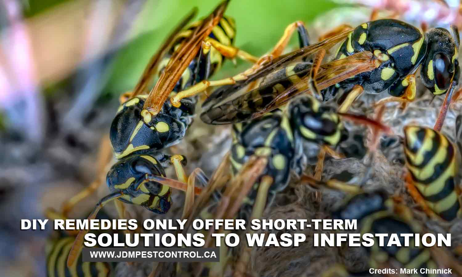 DIY remedies only offer short-term solutions to wasp infestation.