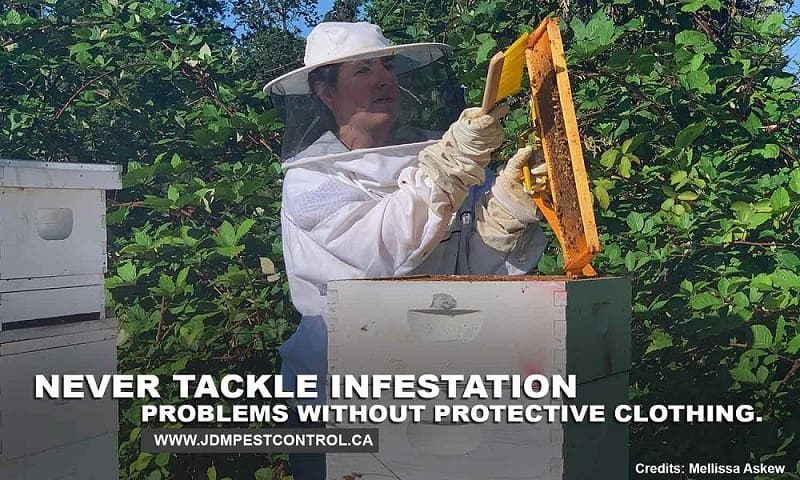 Never tackle infestation problems without protective clothing.