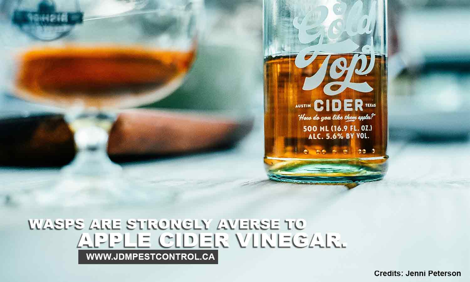Wasps are strongly averse to apple cider vinegar.