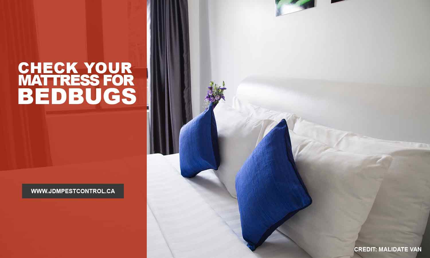 Check your mattress for bedbugs