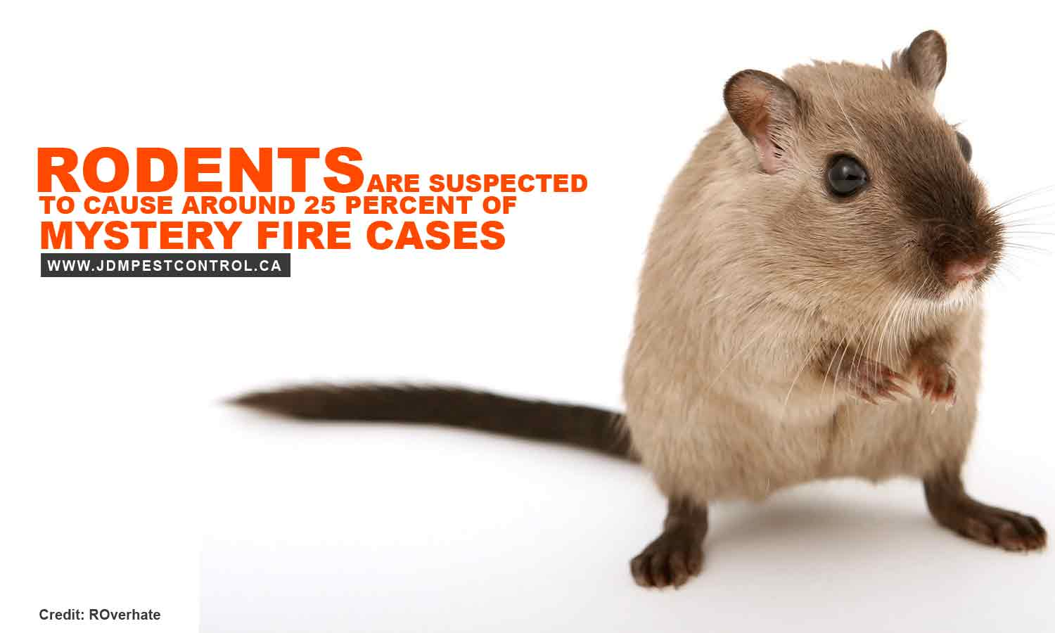 Rodents are suspected to cause around 25 percent of mystery fire cases