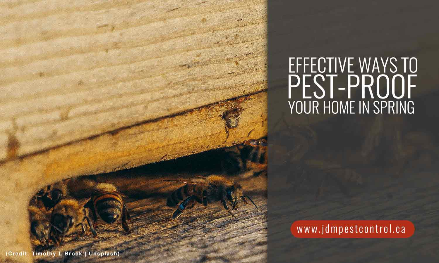 Effective Ways to Pest-Proof Your Home in Spring