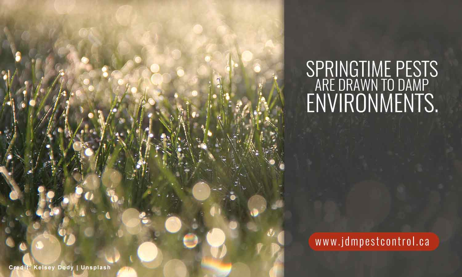 Springtime pests are drawn to damp environments.