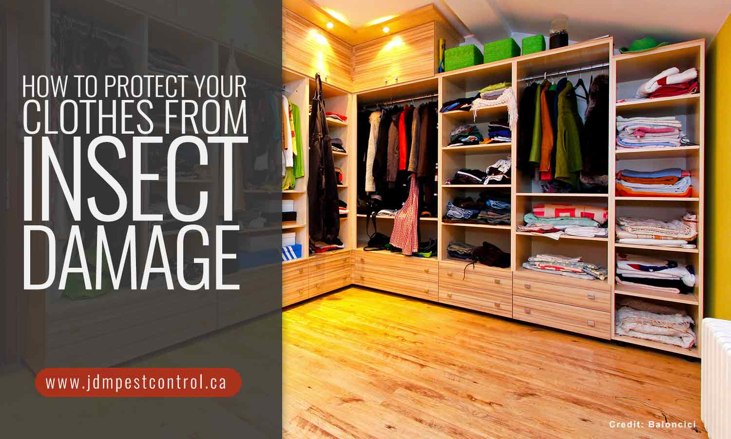 How to Protect Your Clothes from Insect Damage
