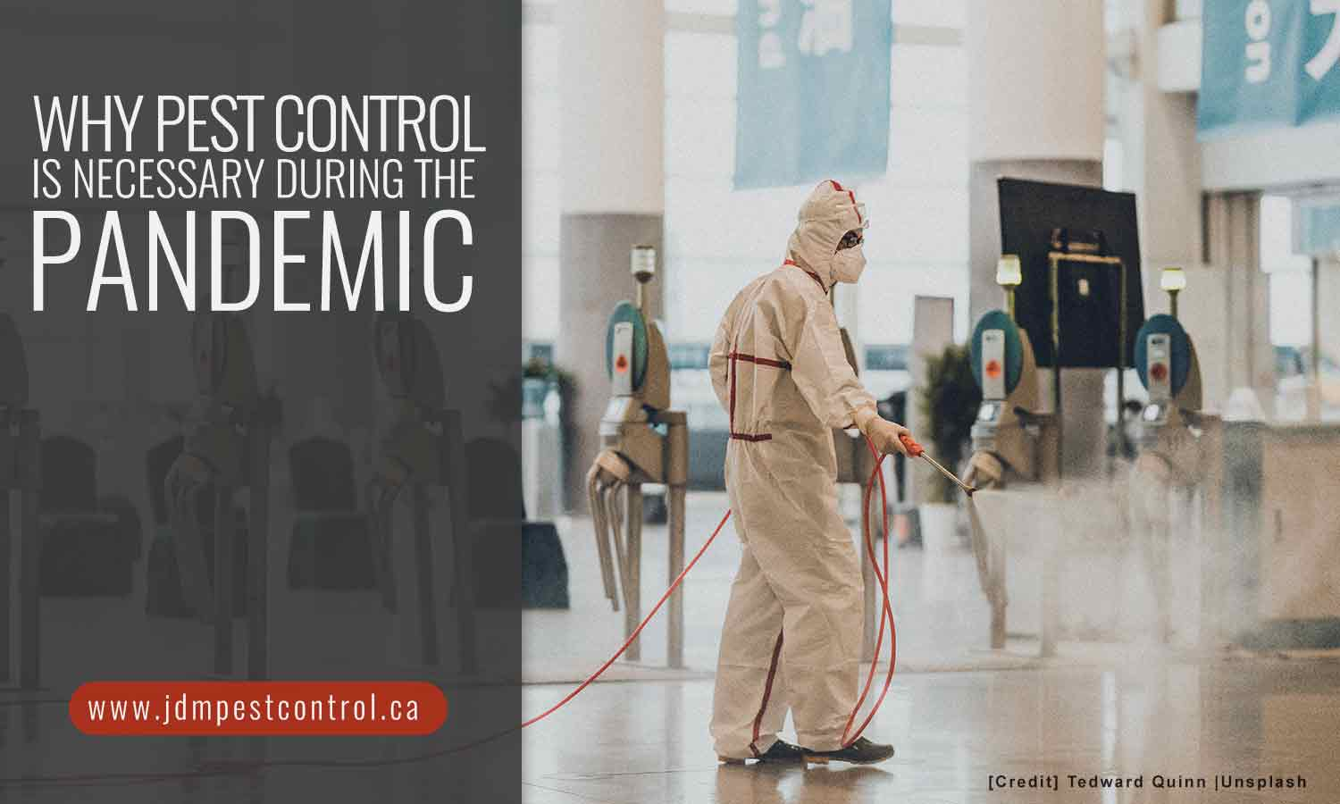 Why Pest Control Is Necessary During the Pandemic