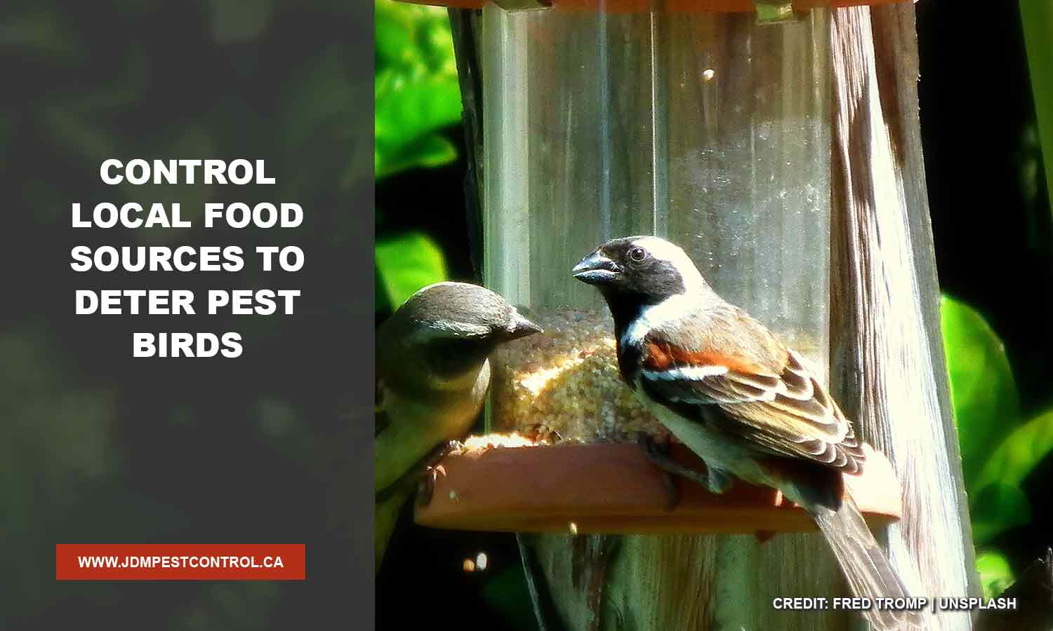 Control local food sources to deter pest birds