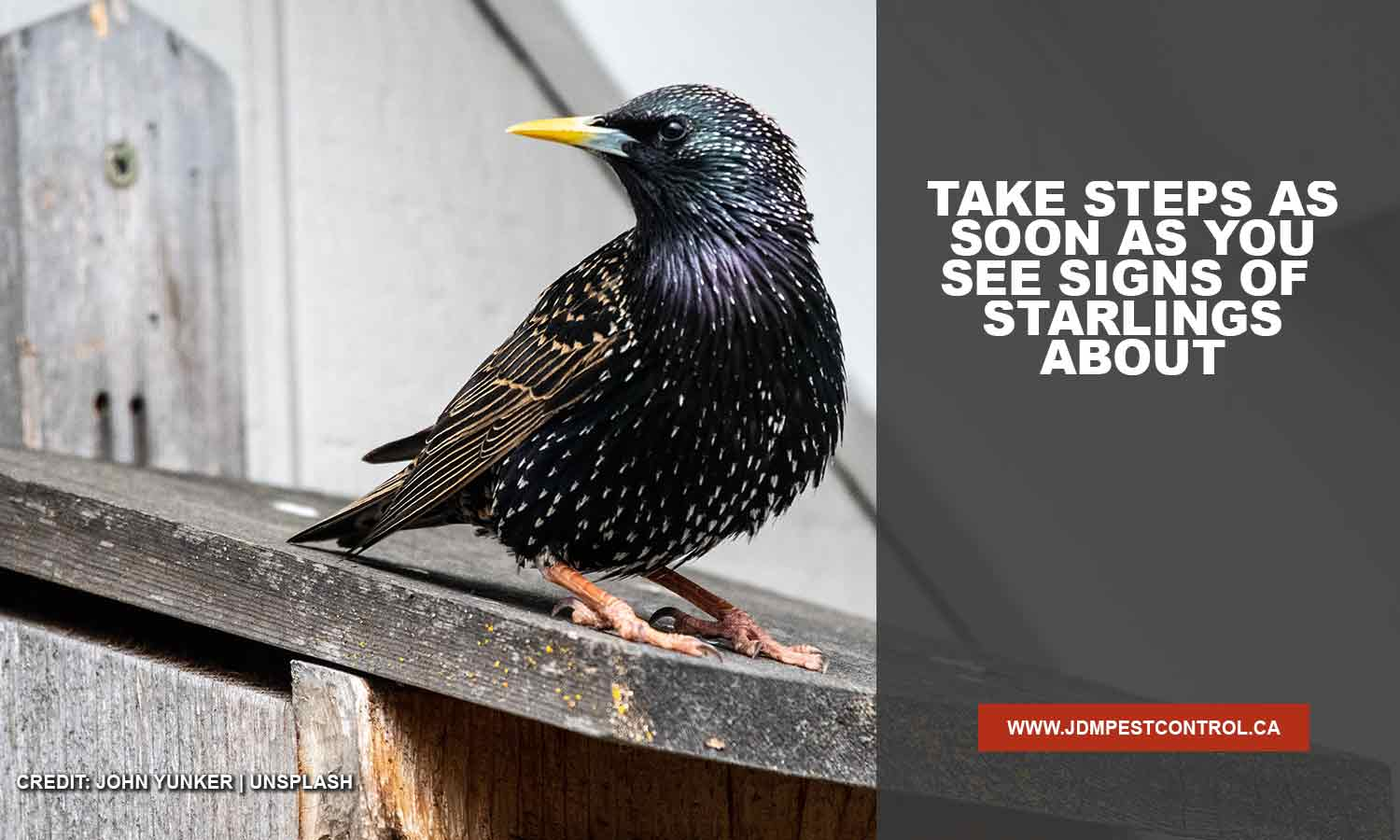 Take steps as soon as you see signs of starlings about
