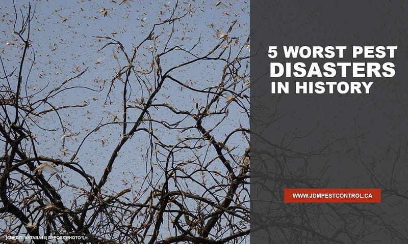 5-Worst-Pest-Disasters-in-History