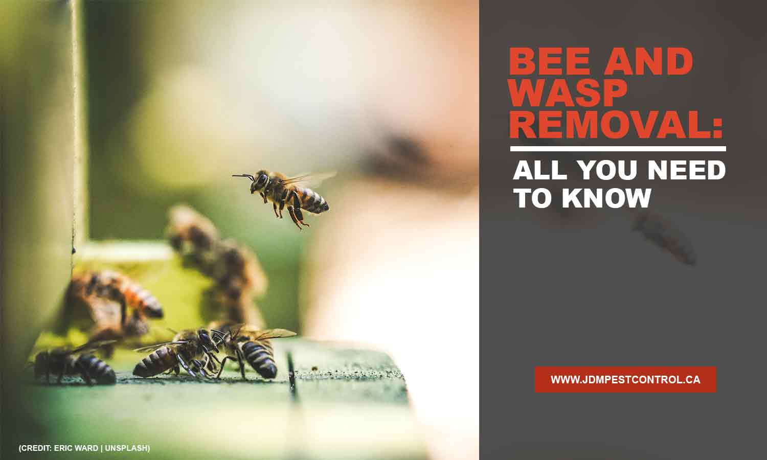 Bee and Wasp Removal: All You Need to Know