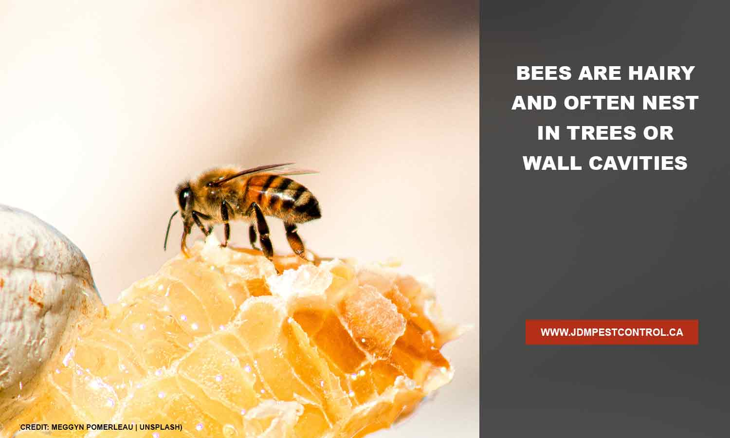 Bees are hairy and often nest in trees or wall cavities