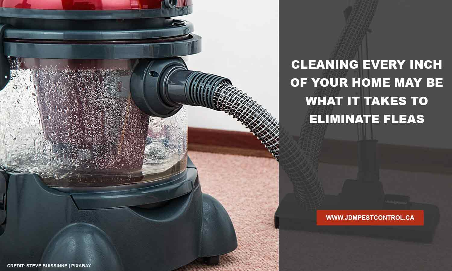 Cleaning every inch of your home may be what it takes to eliminate fleas