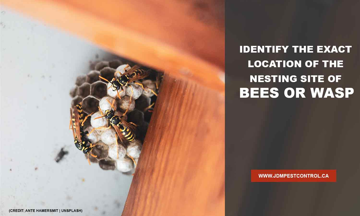 Identify the exact location of the nesting site of bees or wasps