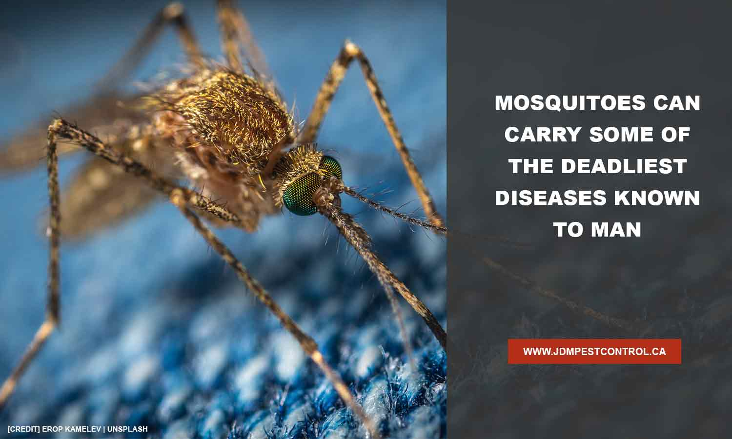 Mosquitoes can carry some of the deadliest diseases known to man