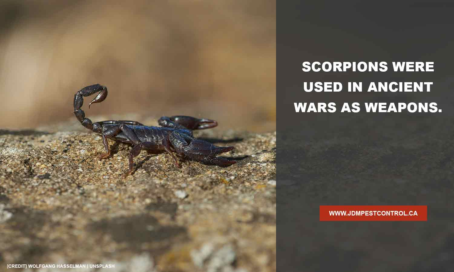 Scorpions were used in ancient wars as weapons.