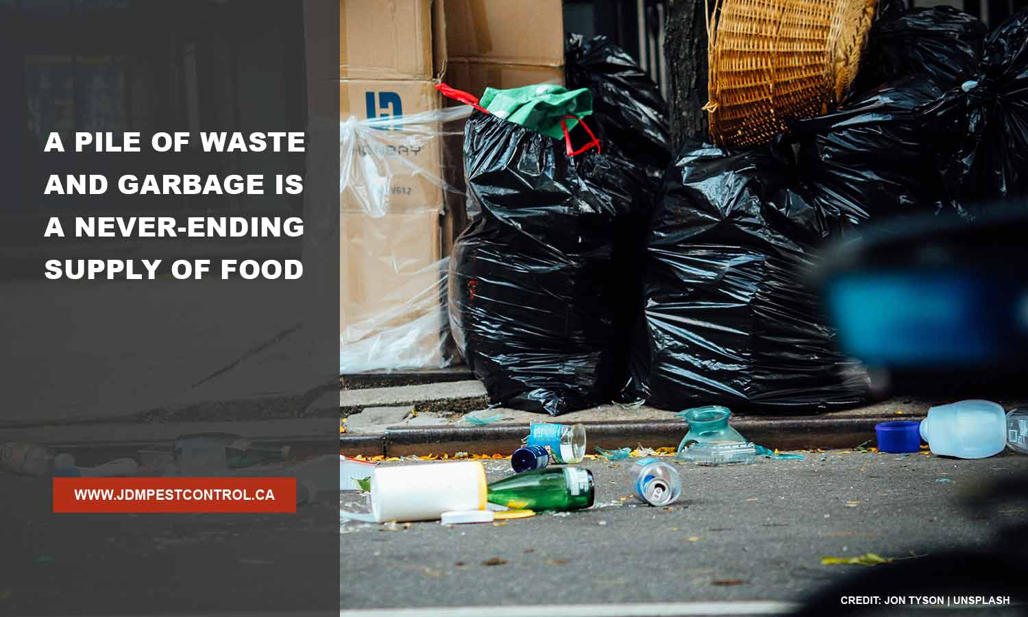 A pile of waste and garbage is a never-ending supply of food