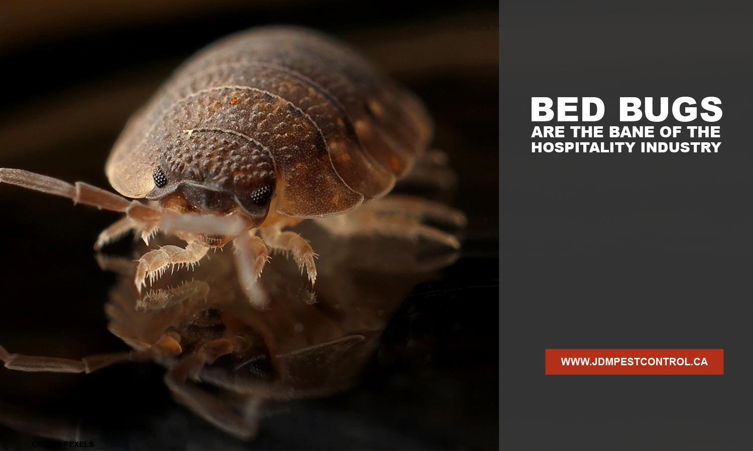 Bed bugs are the bane of the hospitality industry