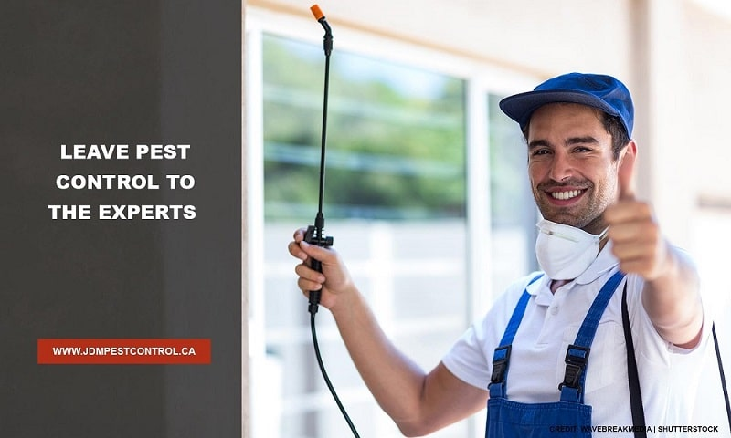Leave pest control to the experts