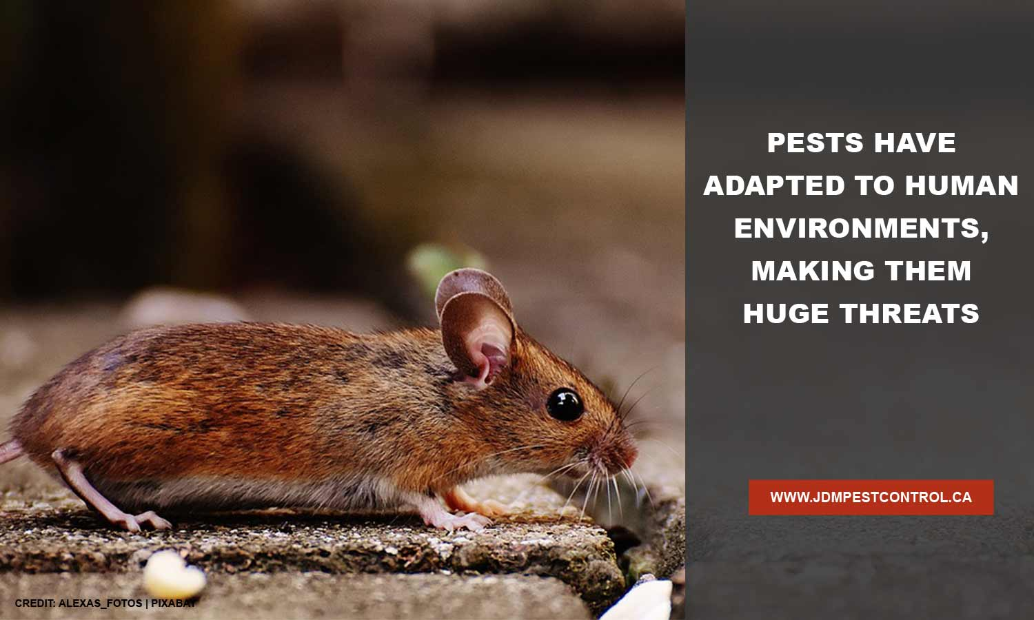 Pests have adapted to human environments, making them huge threats