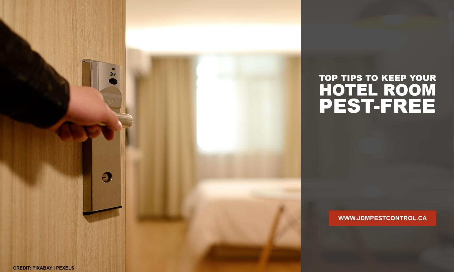 Top Tips to Keep Your Hotel Room Pest-Free