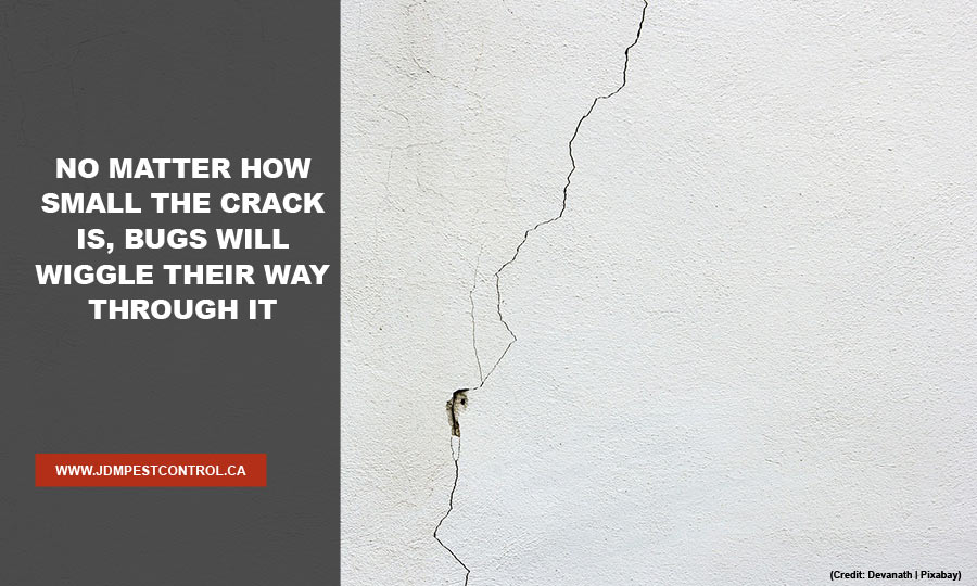 No matter how small the crack is, bugs will wiggle their way through it
