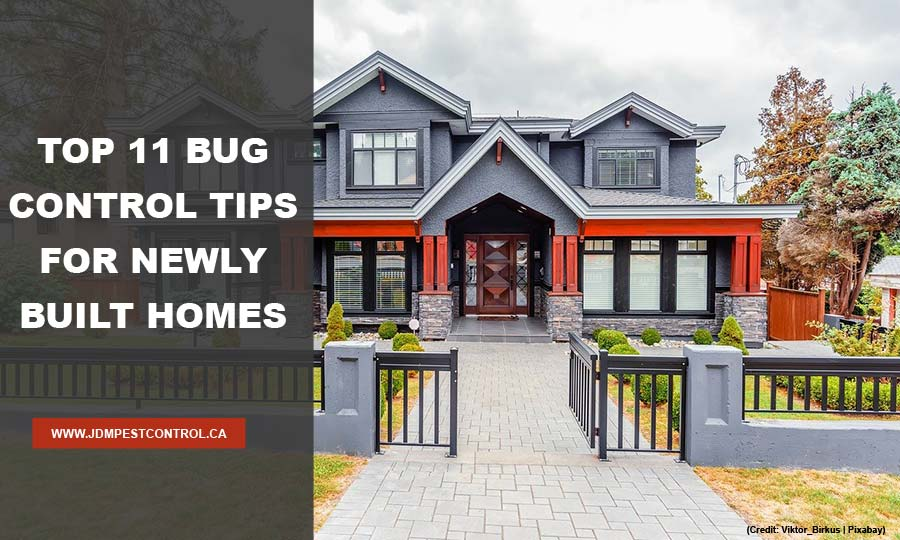 Top 11 Bug Control Tips for Newly Built Homes