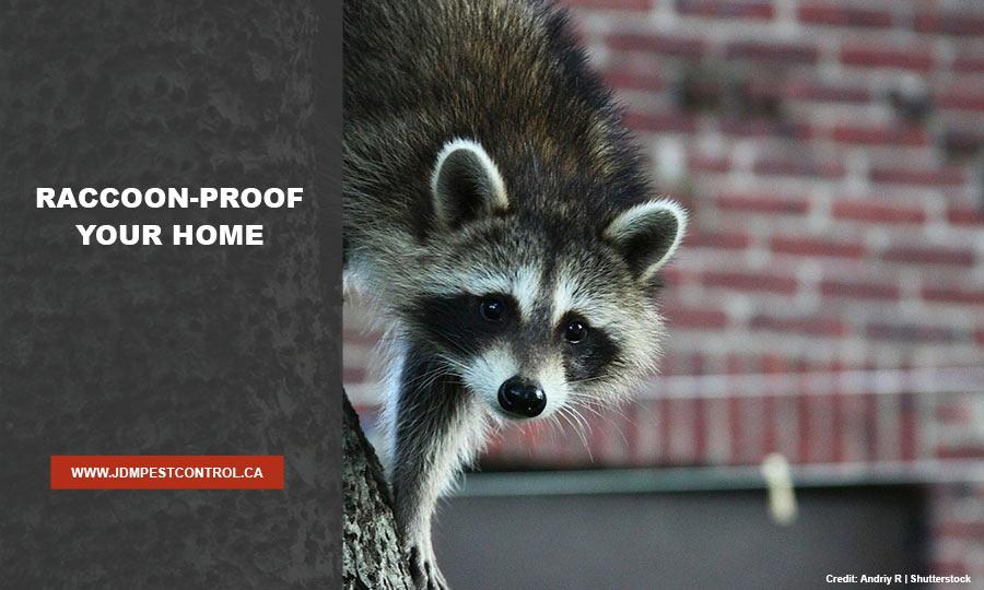 Raccoon-proof your home