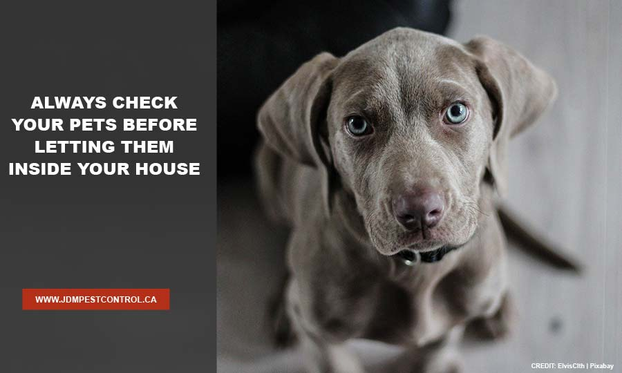 Always check your pets before letting them inside your house