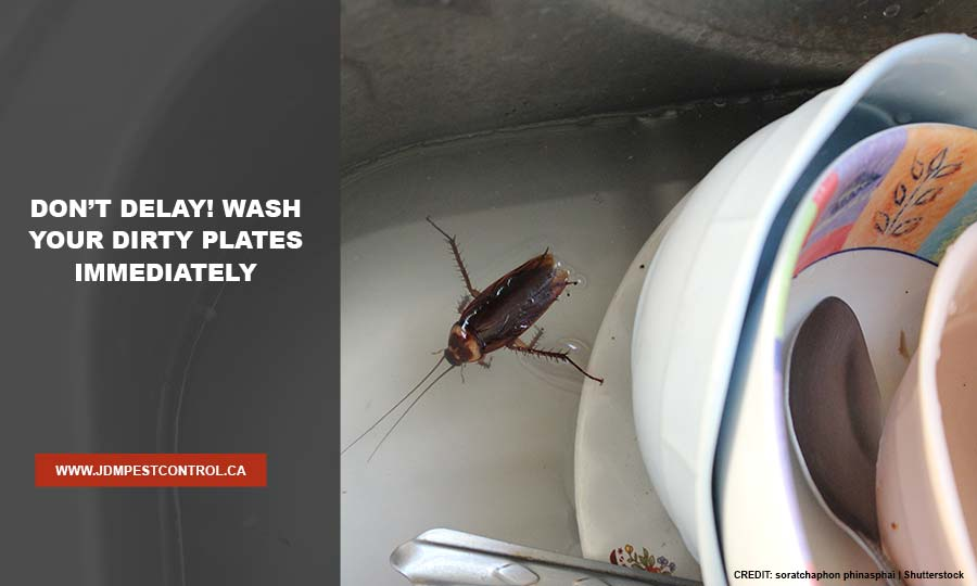 Don't delay! Wash your dirty plates immediately