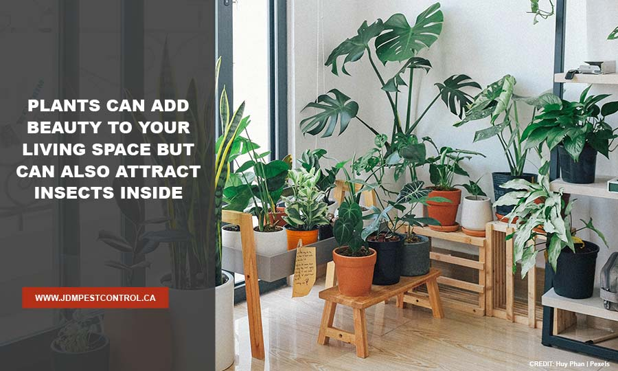 Plants can add beauty to your living space but can also attract insects inside