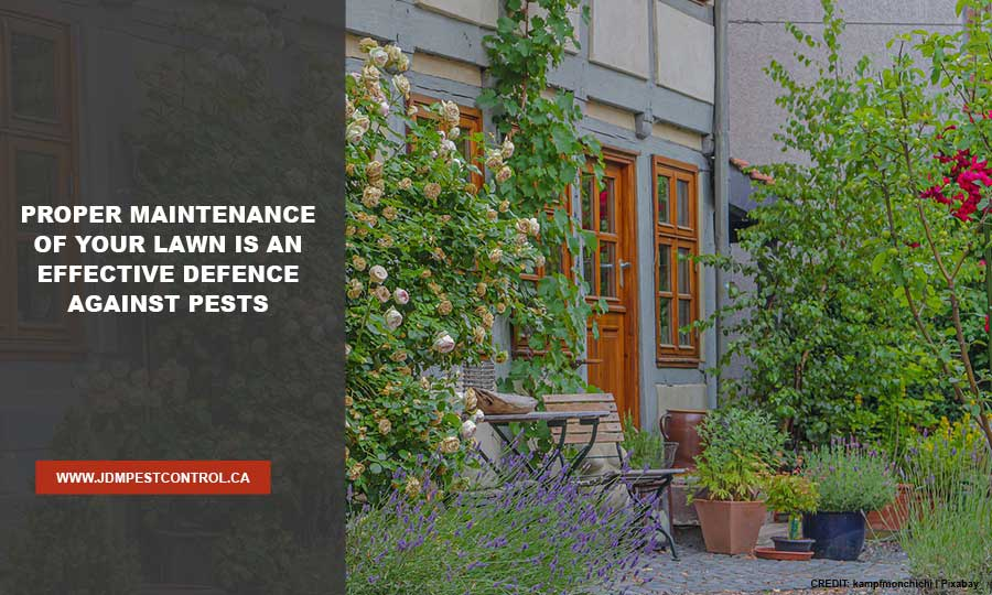 Proper maintenance of your lawn is an effective defence against pests