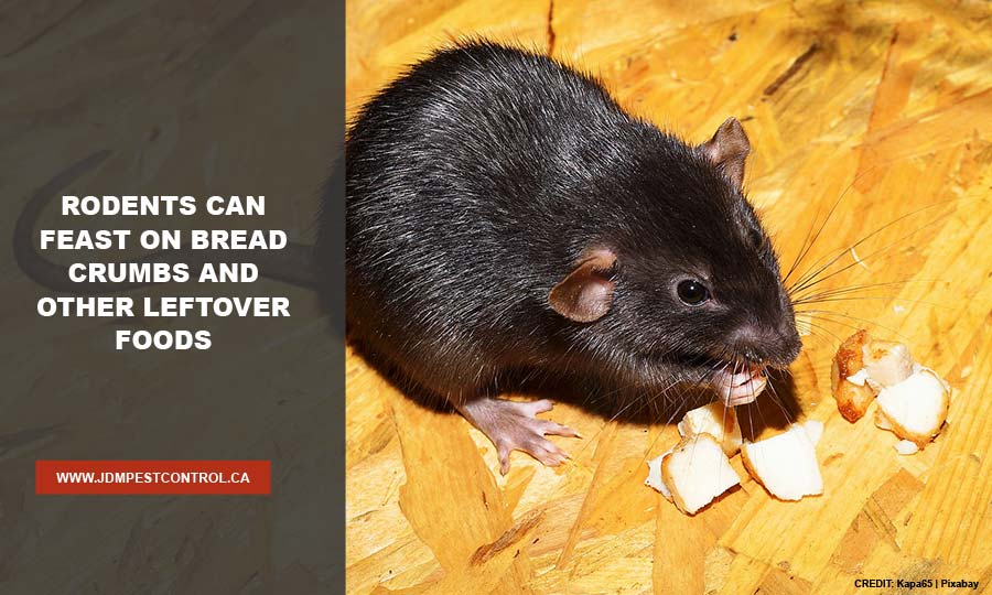 Rodents can feast on bread crumbs and other leftover foods