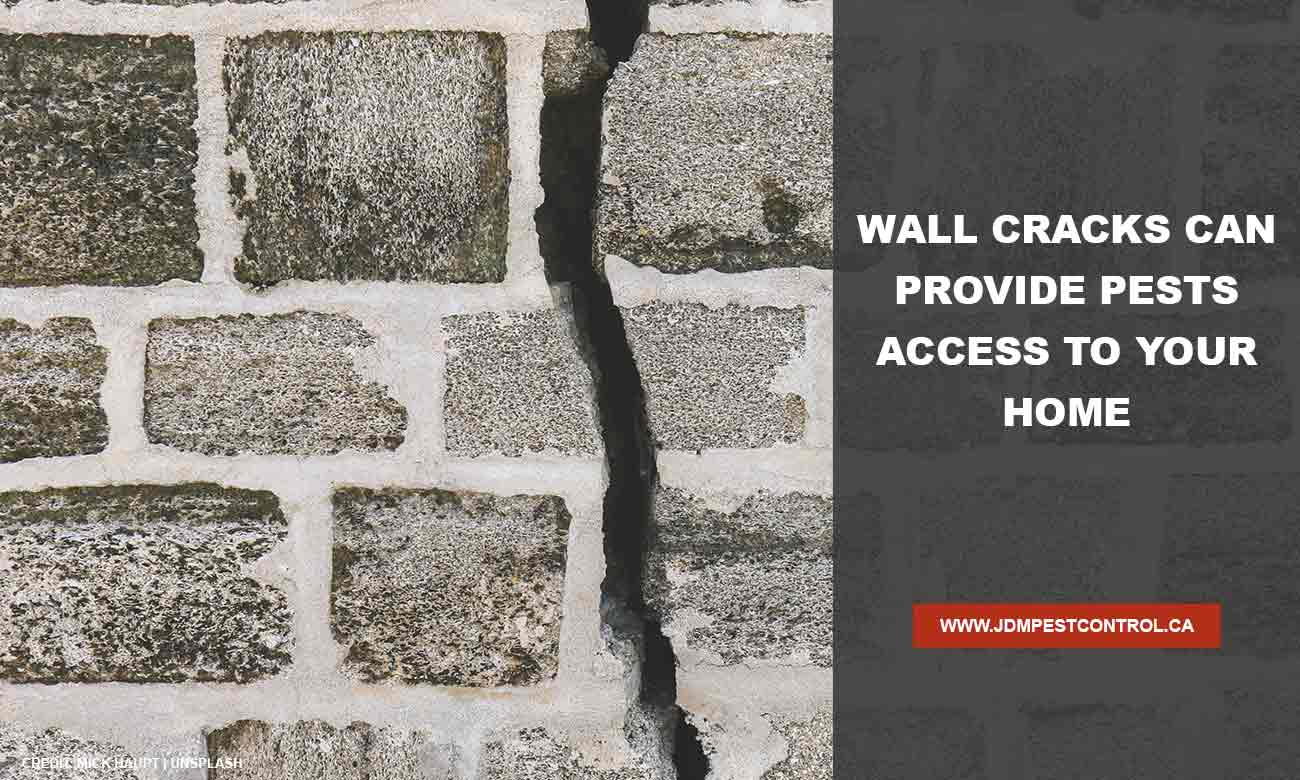 Wall-cracks-can-provide-pests-access-to-your-home