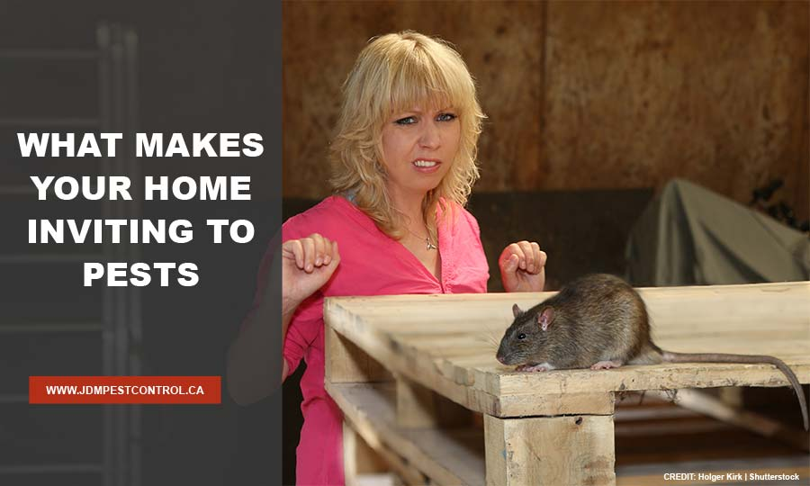What Makes Your Home Inviting to Pests