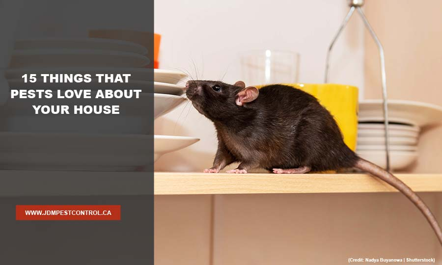 15 Things That Pests Love About Your House