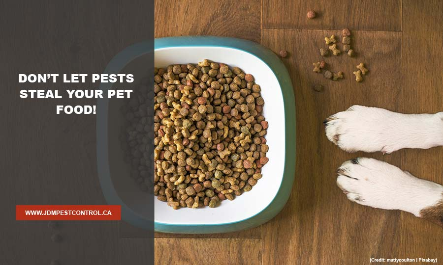 Don't let pests steal your pet food!