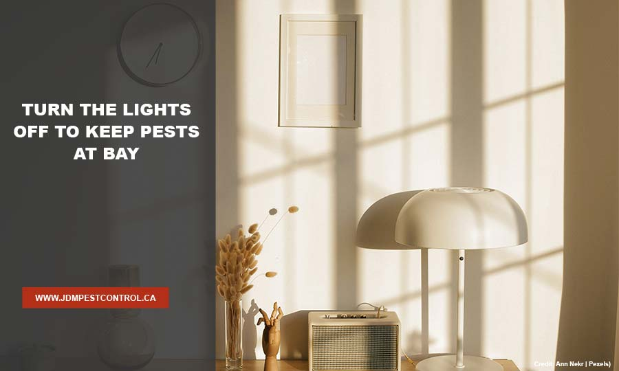 Turn the lights off to keep pests at bay
