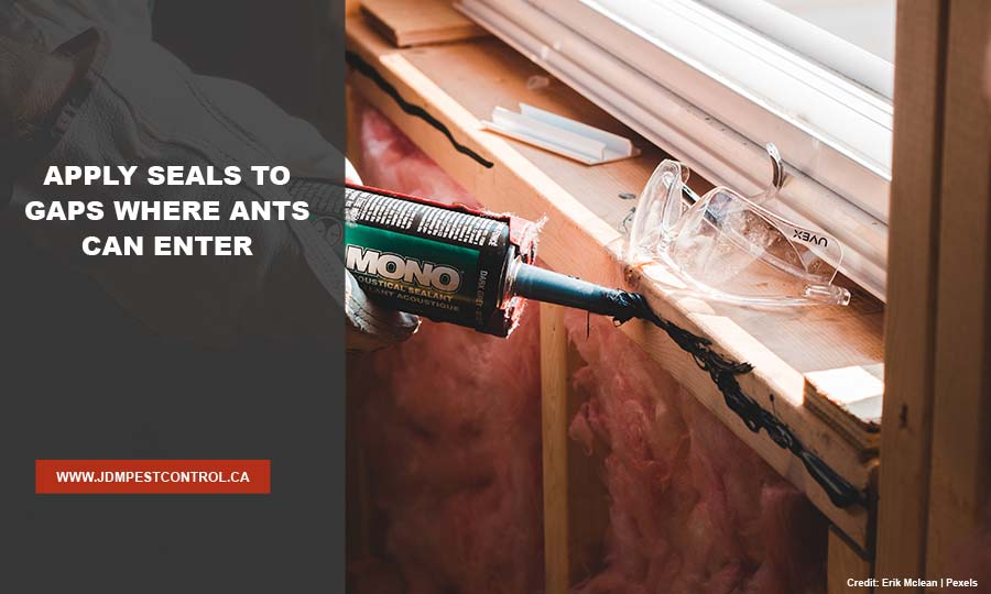 Apply seals to gaps where ants can enter