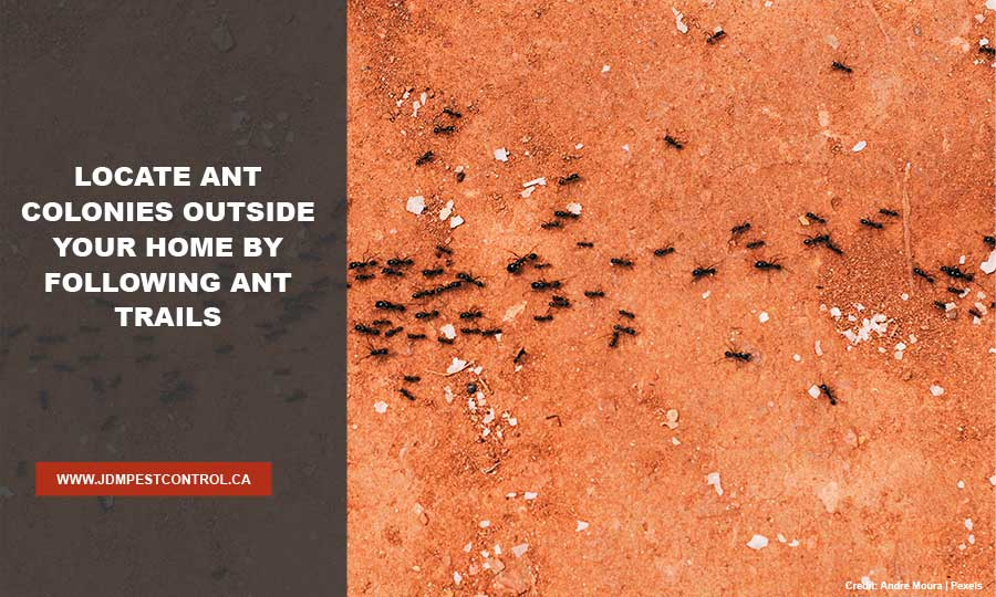 Locate ant colonies outside your home by following ant trails