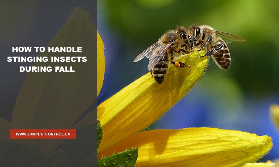 How to Handle Stinging Insects During Fall