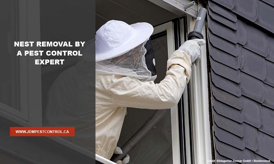 Nest removal by a pest control expert