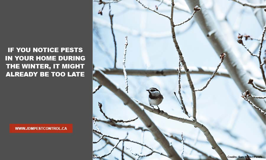 If you notice pests in your home during the winter, it might already be too late