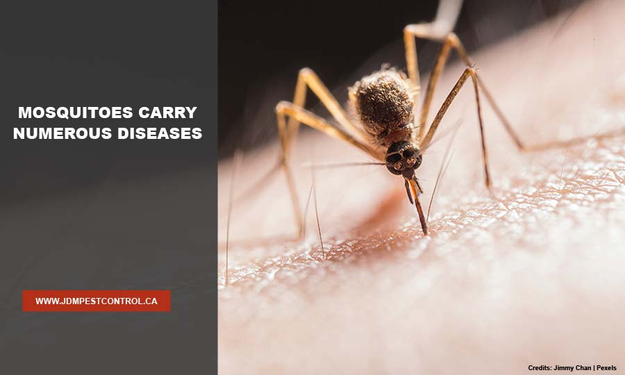 Mosquitoes carry numerous diseases